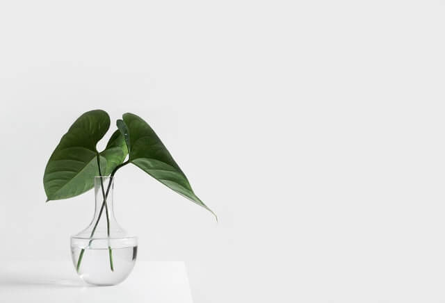simple plante